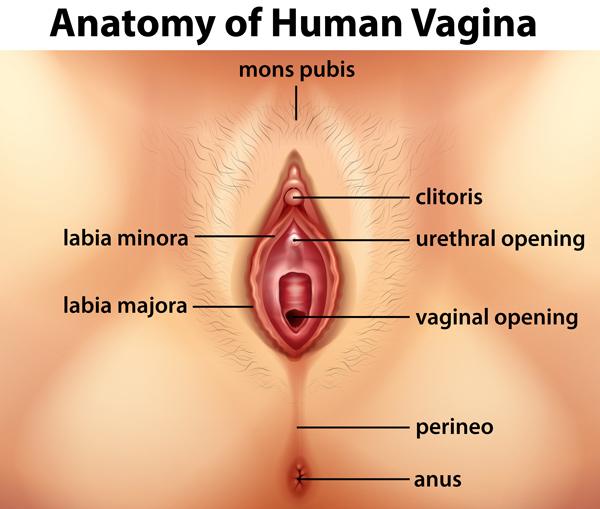 vagina_anatomy